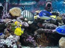 Saltwater fish acclimation methods for Acclimating saltwater fish