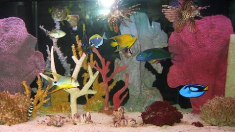 an analysis of marine fish keeping in public aquariums The largest tropical fish wholesale and marine fish wholesale and aquarium fish fish, supplying pet stores, public aquariums health of fish keeping.