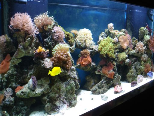 saltwater aquarium nitrate fish in an aquarium 512x384