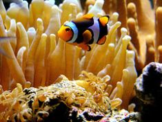saltwater aquarium temperature