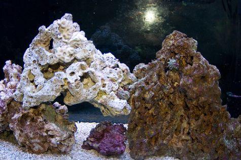 Saltwater Aquarium Live Rock