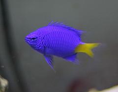 Beginner Saltwater Fish