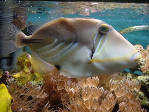 Feeding saltwater fish saltwater aquarium online guide for How to saltwater fish