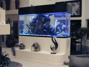 Saltwater aquarium setup how to set up a marine reef for Marine fish tanks