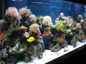 saltwater aquarium online guide