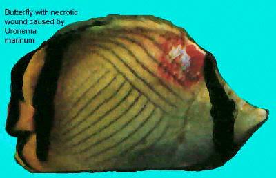 saltwater fish diseases and treatments saltwater aquarium online guide