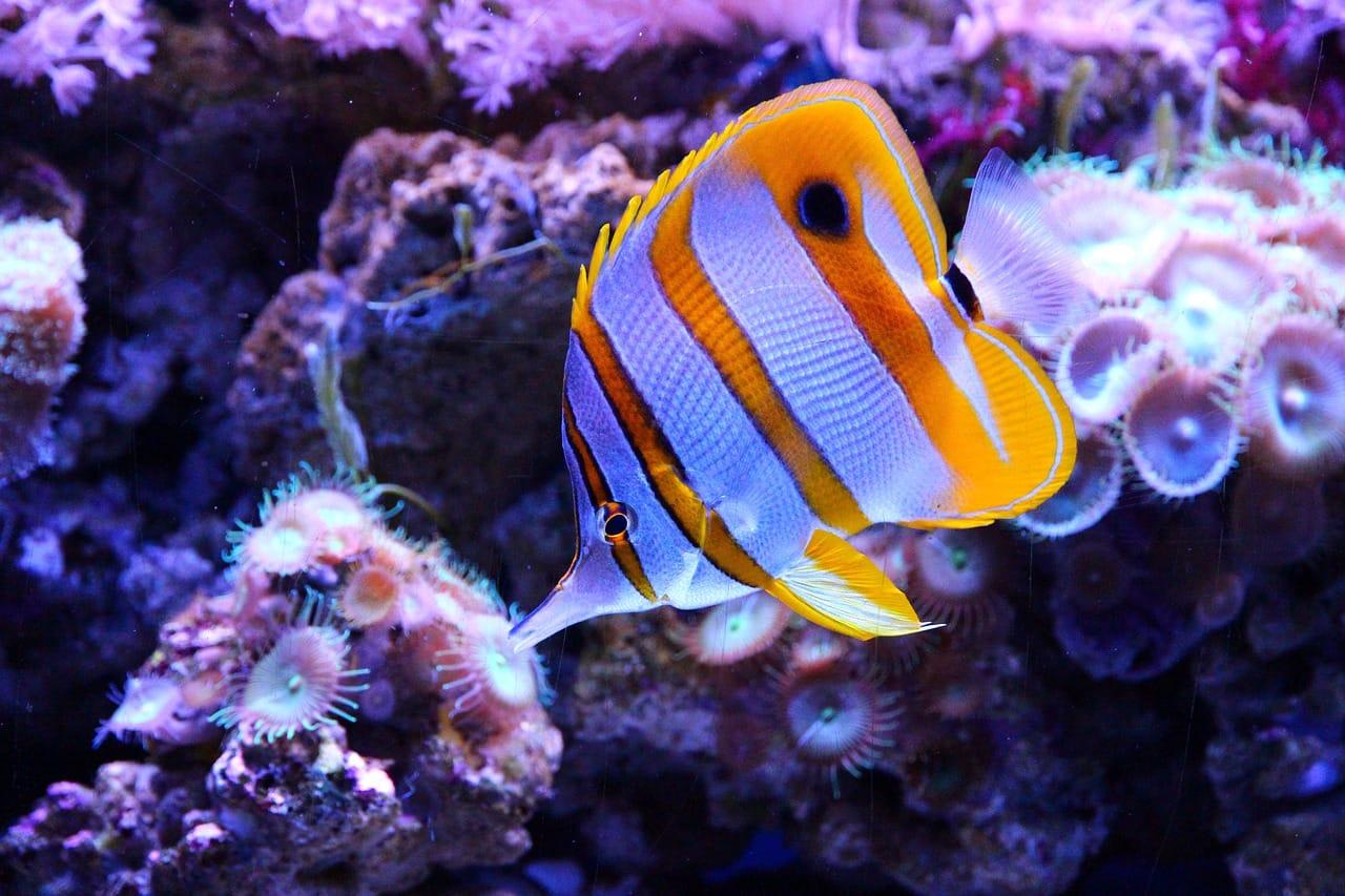 Saltwater Fish Acclimation Methods Saltwater Aquarium Online Guide
